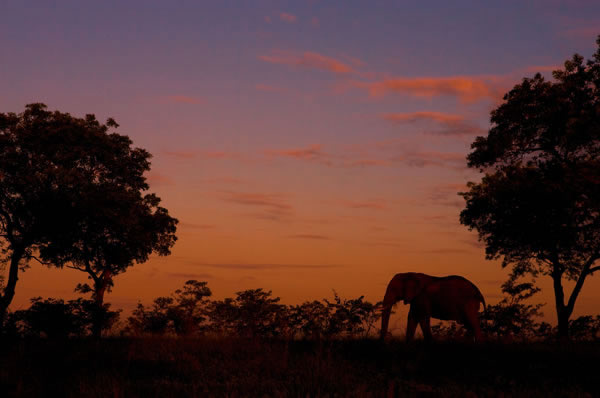 Elephant in Sunset - South Africa Scandi